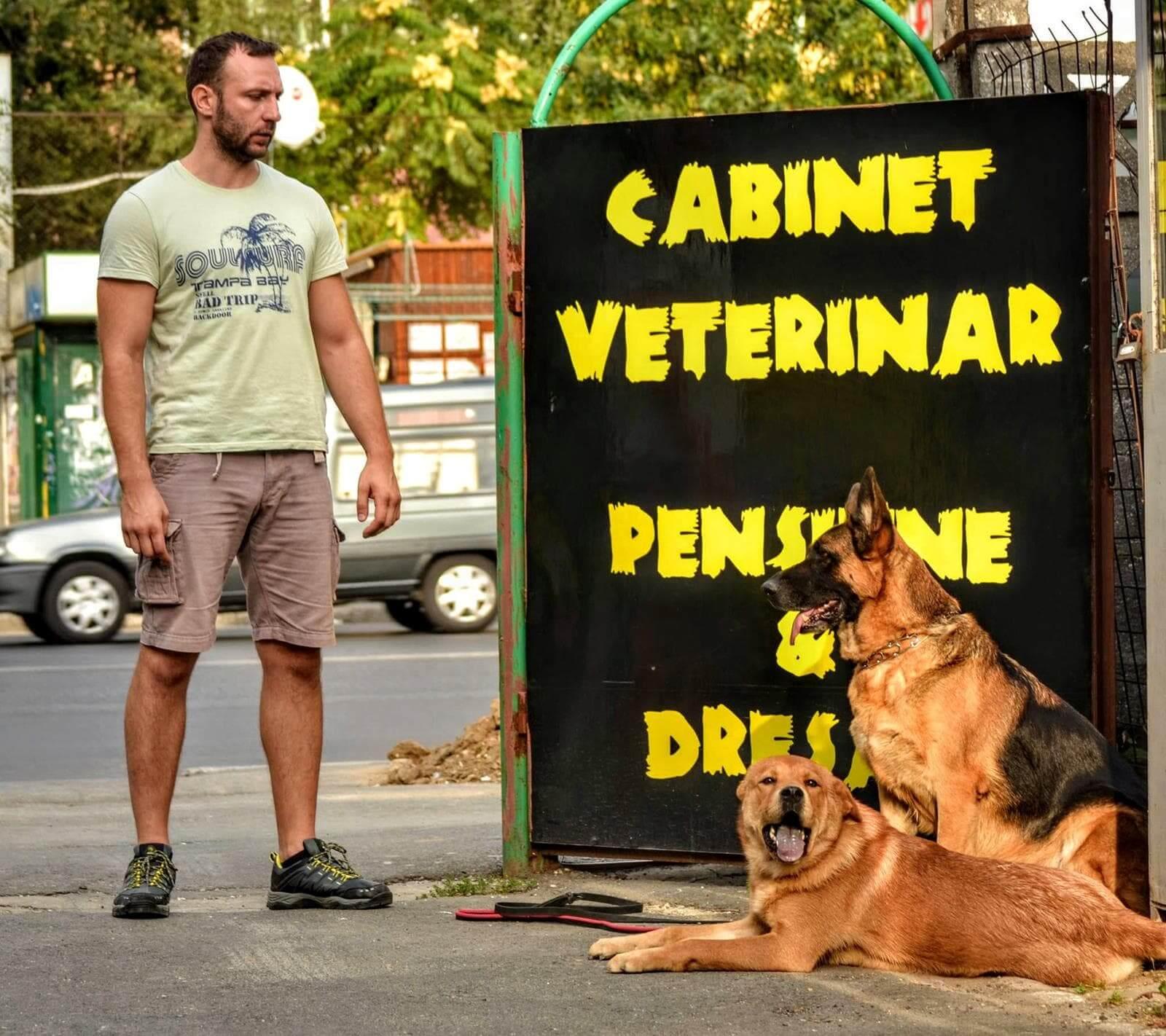 dresaj-si-educatie-canina-min