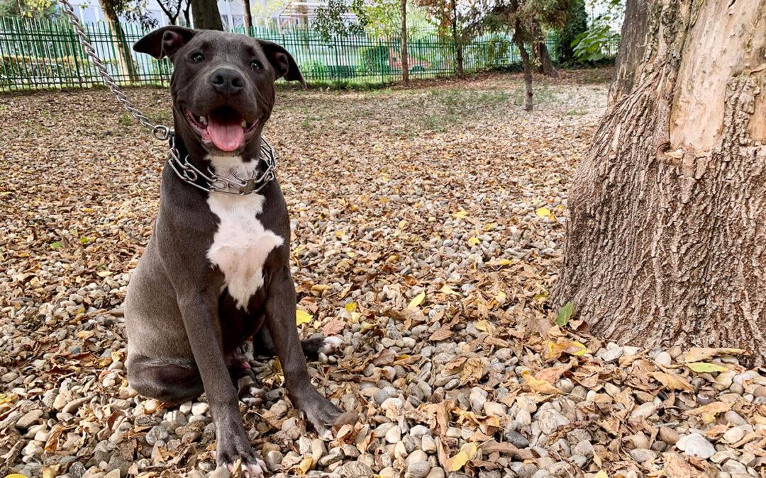 Educație canină sau dresaj? Află ce are nevoie câinele tău!