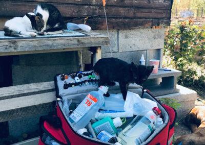 cabinet veterinar deplasari la domiciliu