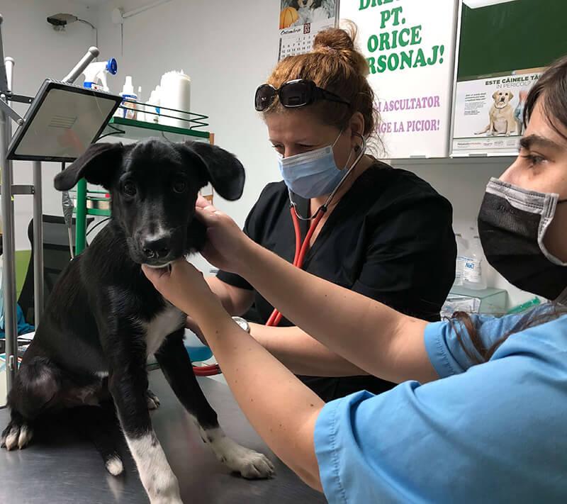servicii veterinare complete cabinet bucuresti
