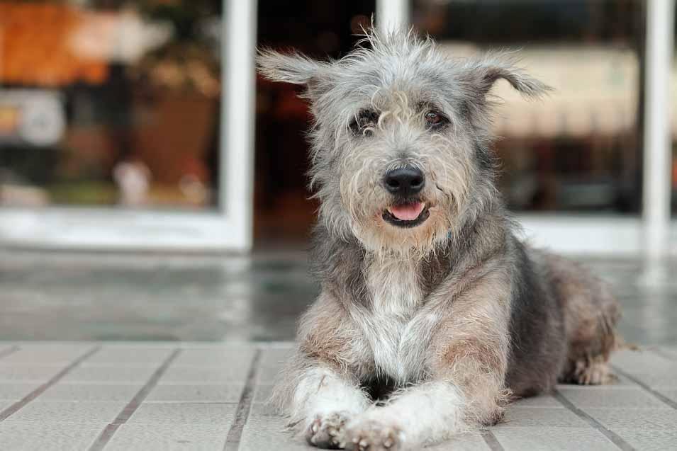 Ce faci dacă câinele tău are un lipom?