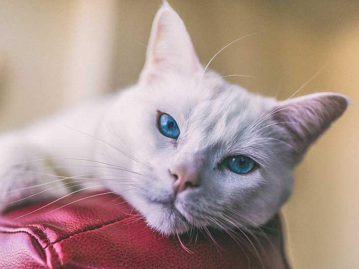 Ce este calicivirusul felin?