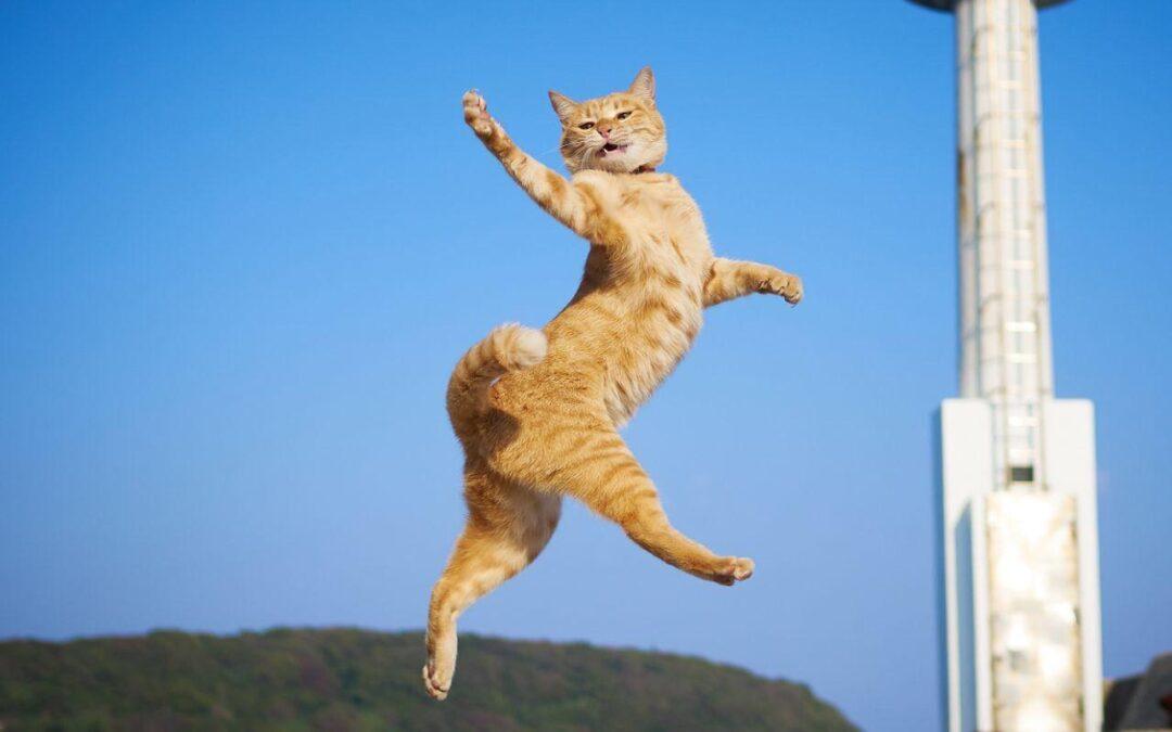 Sindromul Felin De Cădere De La Înălțime: Sunt Pisicile În Siguranță Când Sar?