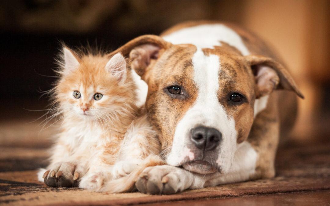 Sfaturi Utile Pentru A Vă Menține Animalul De Companie Sănătos
