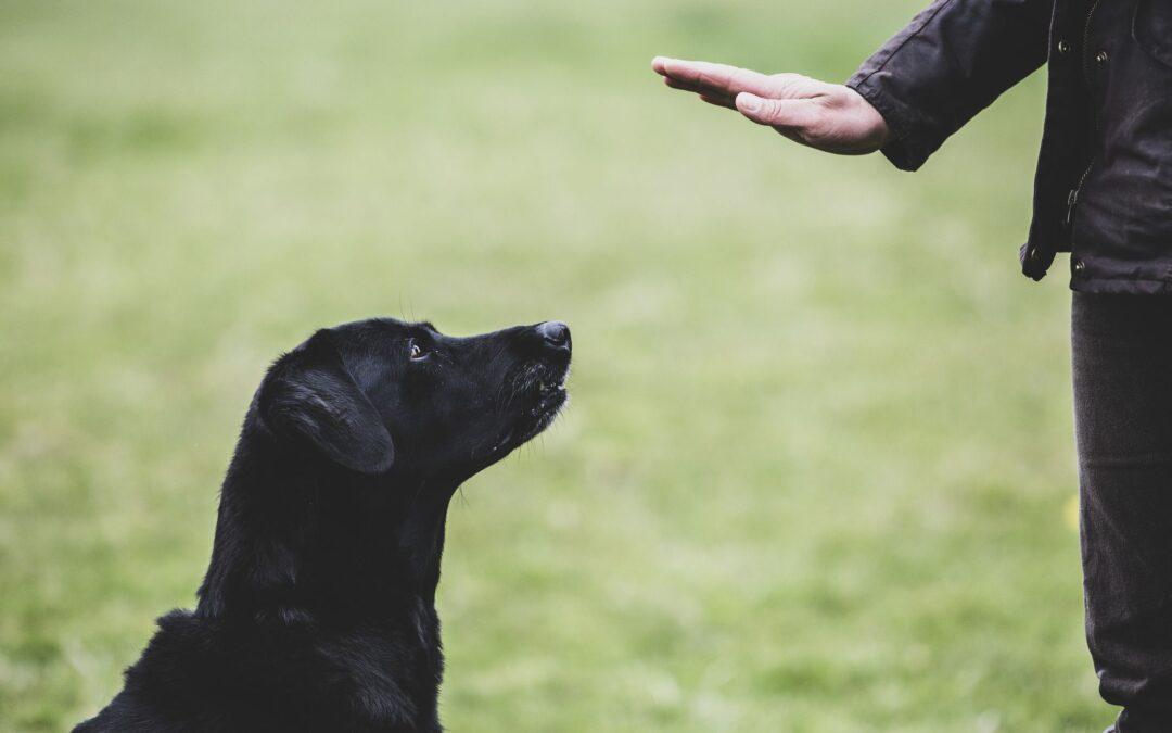 5 comenzi esențiale pentru câini